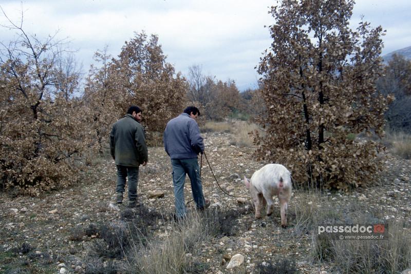 A la recherche des truffes en Haut Provence ; Truffle hunting in Provence