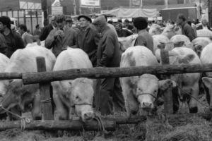 """Foire Agricole de Beaucroissant - Isère - 1988 ( Photo """"Creative Commors"""")"""
