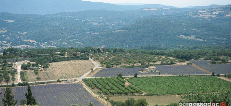 champs de lavandes a saignon dans le vaucluse en provence