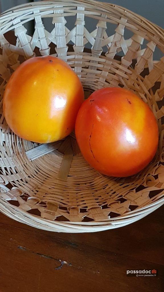fruit kaki
