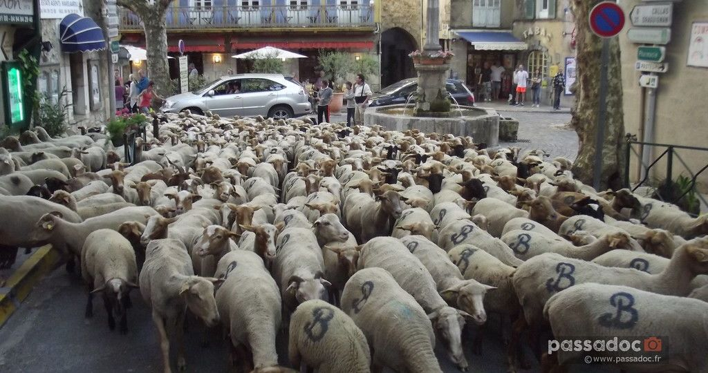Moutons a Bargemon Var - photo André Abbe